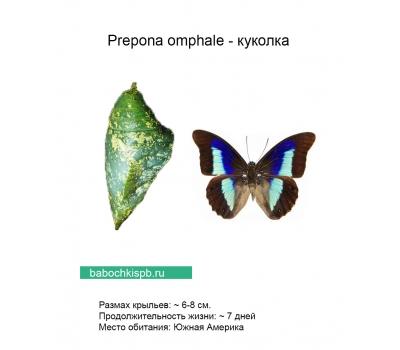 Живые бабочки в подарок спб